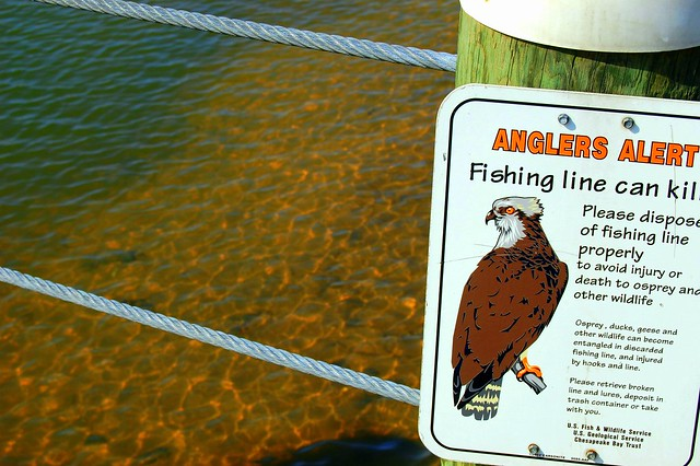 Fishing line sign flickr photo sharing for Fishing line camera