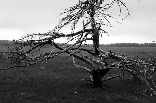 Big Meadow, Skyline Drive (3)