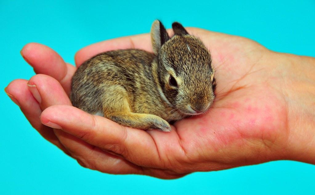 Wild newborn rabbits - photo#5