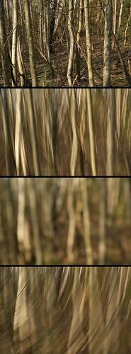 blur tree forest spring bokeh latvia motionblur camerashake cesis cēsis gaujanationalpark gaujasnacionālaisparks intentionalcameramovement gaujavalley
