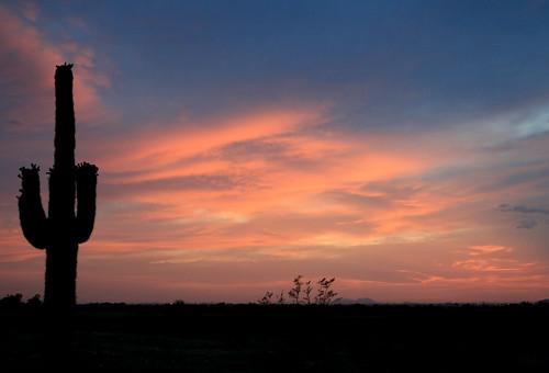 pink sunset arizona cactus phoenix silhouette clouds saguaro