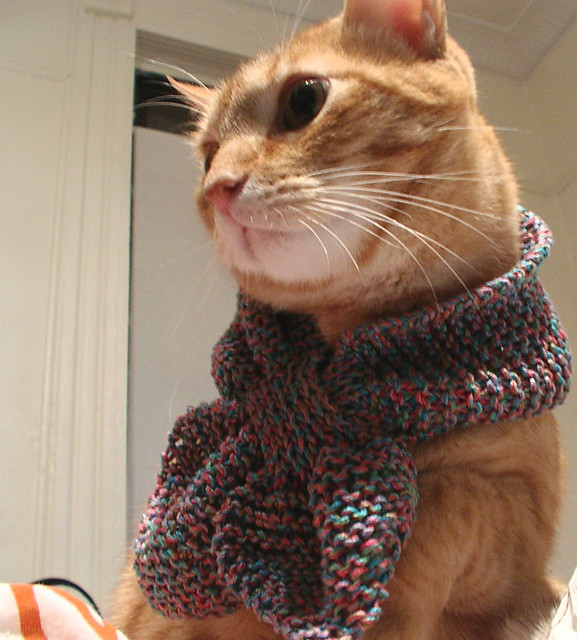 Knitted Cat Scarf Pattern : Cat Scarf? Flickr - Photo Sharing!