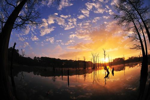 georgia bainbridge d300 105mmf28gfisheye fotosniper openpond