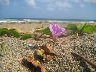 Image of Playa Sardinera. arecibo puetrorico