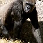 Los Angeles Zoo 088
