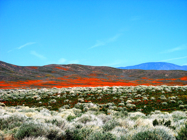 Antelope Valley, desierto de Mojave, California.