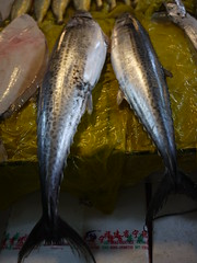 bass(0.0), perch(0.0), cod(0.0), sardine(0.0), milkfish(0.0), animal(1.0), fish(1.0), fish(1.0), forage fish(1.0), bonito(1.0), oily fish(1.0),