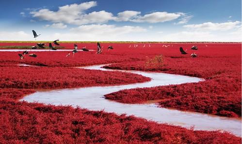Red Blanket 红地毯