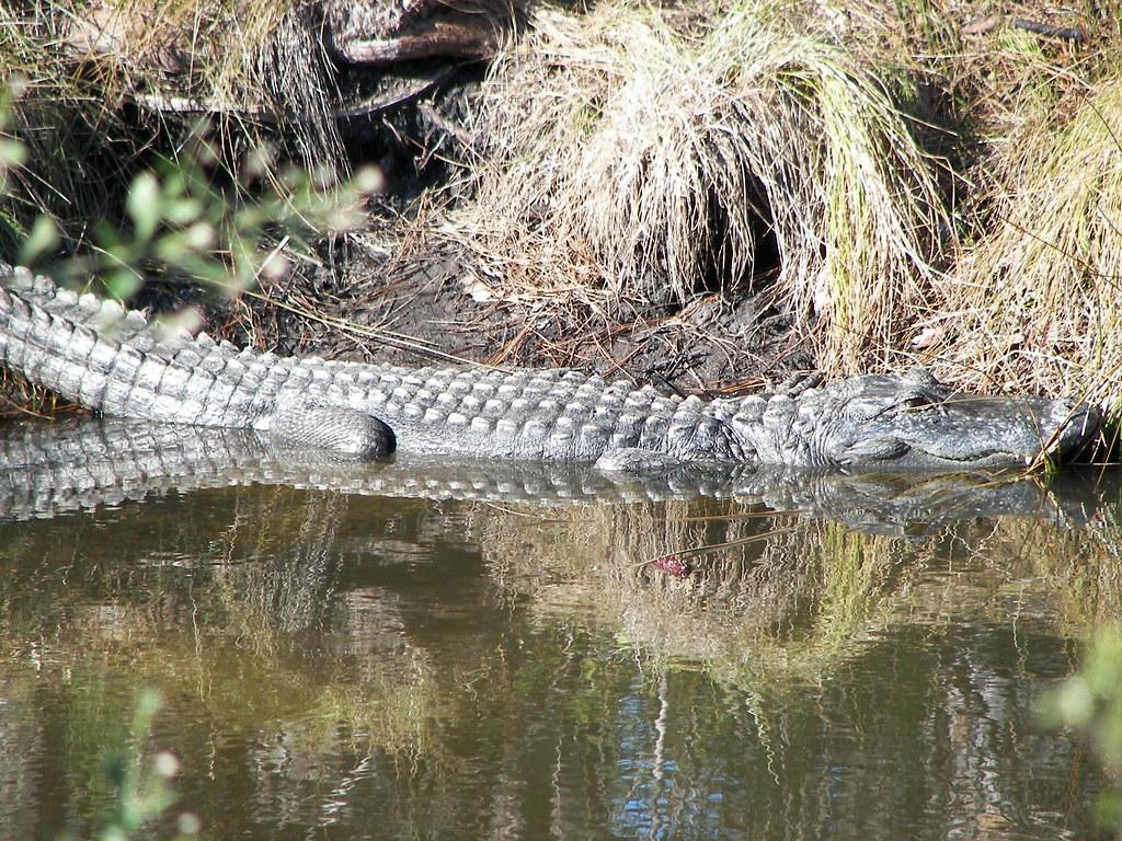 Photos From Around Alligator Point Florida