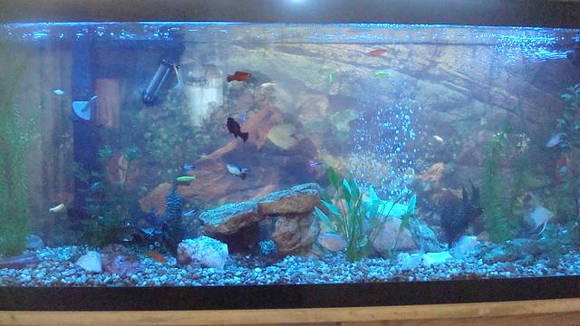 Fish tank now flickr photo sharing for Fish tank camera