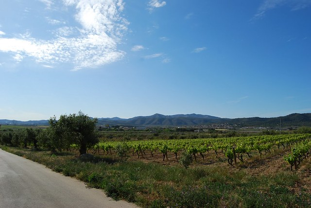 Barcelona wine country