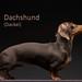 "Dachshund (Dackel) - ""long exposure"" by rskura"