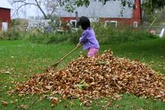Olivia Raking Leaves