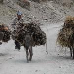 Donkeys with Heavy Loads - Wakhan Valley, Tajikistan
