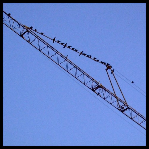 Crows on a Crane
