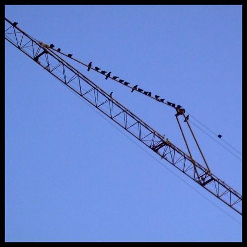 Crows on a Crane