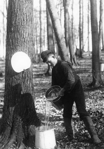Sap running 1910