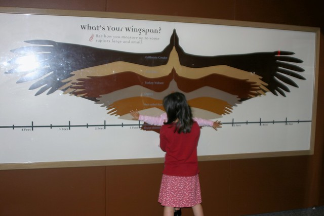 How Wide is Your Wingspan