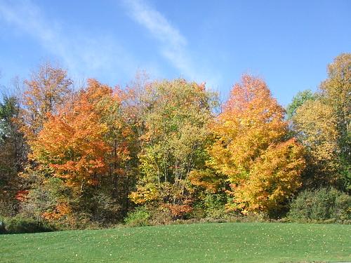 ny newyork fallcolors autumncolours allegany findleylake upstatenyandpa geordiemac ©2007georgemcvitiesomerightsreserved