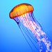 Jellyfish - Living Art 2