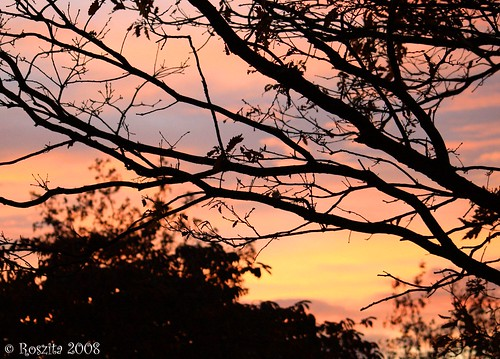 Sunset Through The Trees..........................