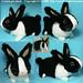 dutch rabbit by cornflakegirl