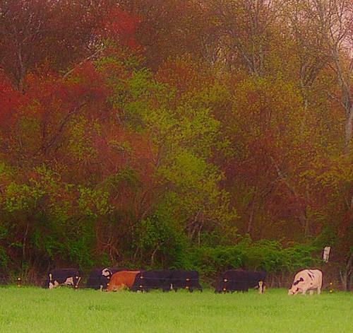 pictures camera trees sunlight color window grass animal landscape flickr image connecticut picnik