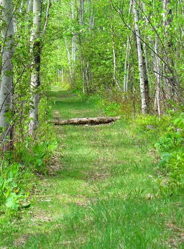 tree woodland path fallen picnik