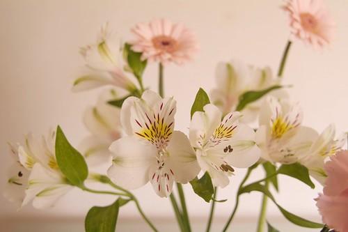Interiér plný květin
