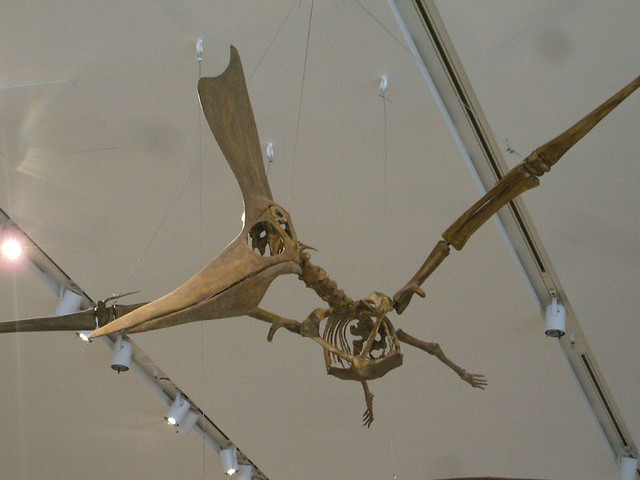 ... Royal Ontario Museum: Pterodactyl Skeleton | Flickr - Photo Sharing