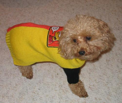 Pumpkin The Dog - a Rescue