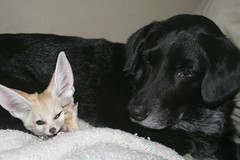 Scout and Doggie Getting ready to nap