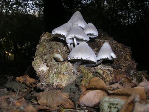 Ghostly white mushrooms
