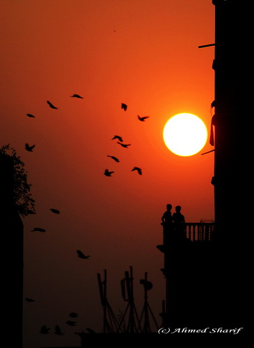 city sunset red sun colour birds silhouette buildings nikon photographer disk dhaka nikkor figures bangladesh polaris littlestories d80 mohammadpur aplusphoto af180mmf28 diamondclassphotographer flickrdiamond picswithsoul