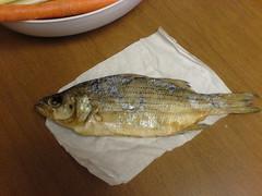 animal, perch, fish, fish, seafood, food,