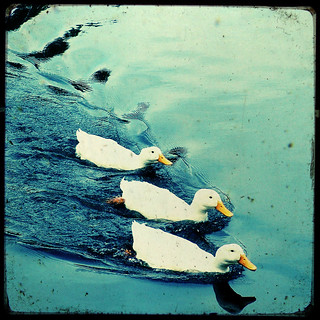 Ducks in a row TTV