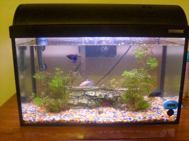 Whole small tropical tank 2 flickr photo sharing for Waterhome aquarium