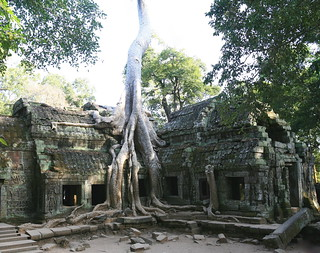 Ta Prohm Tentacles