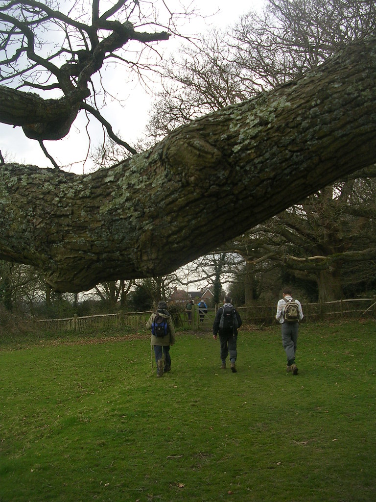 Nearing Burwash Nice branch... a shame those walkers had to get in the shot.... Stonegate to Robertsbridge
