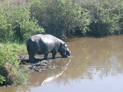 Serengeti_2007 075