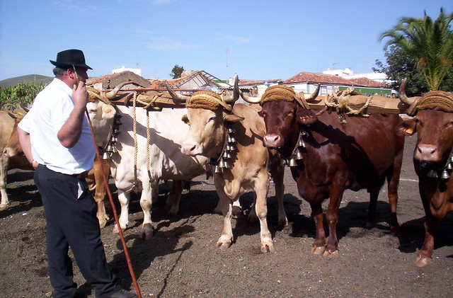 Canarian Cowboys and Preposterous Pets