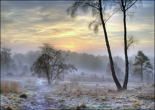 morning winter mist cold beautiful sunrise landscape frozen frost view earth freezing frosty olympus heath common soe hdr goldstar heathland e510 beautifulearth tonemapping creativephoto photomatrix golddragon abigfave platinumphoto anawesomeshot topofthefog superbmasterpiece infinestyle diamondclassphotographer flickrdiamond ilovemypic betterthangood goldstaraward dragongoldaward dragongold platinumsuperstar