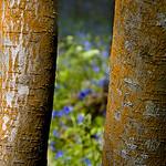 TreeBells