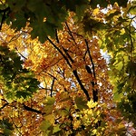 Larchmont in the fall