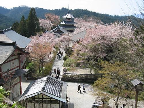 Yoshinoyama Cherry Blossoms