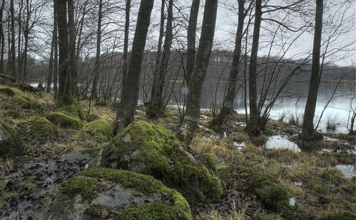 wood forrest midday hdr varberg alder halland alnusglutinosa betulaceae blackalder långanskogen byasjön dagsås