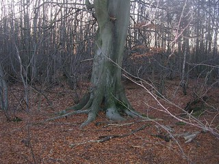 tree in a wood