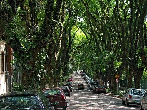 Zašto je ovo mnogima najlepša ulica na svetu? 2359501645_095721ab7f