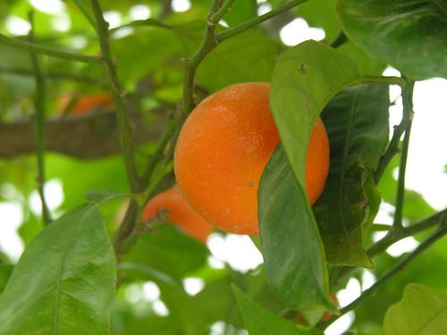 Narancs az Égei-tenger egyik szigetén