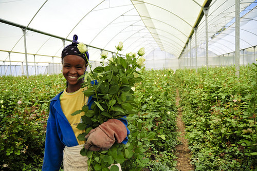 Golden Rose Agrofarms Ltd.